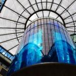acuario cilindrico mas grande del mundo